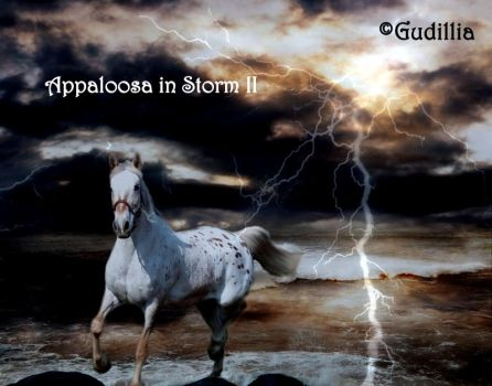 Appaloosa in Storm II by GuDillia