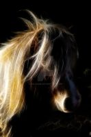 A very bad hair day..... by bale2012
