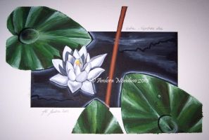 White water lily by flysch