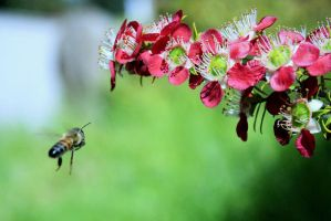 Bees in Flight 2 by Coraloralyn