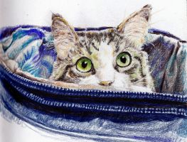 Kitty in a bag by KingVahagn