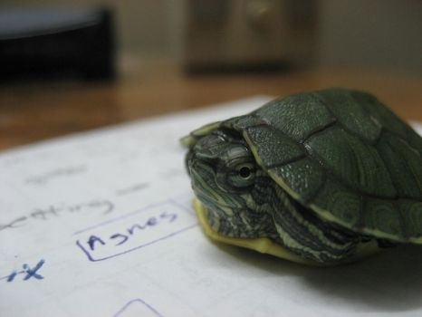 tiny green turtle 06 by turbosianor