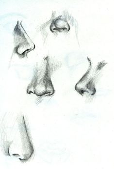Nose Study by Fro-Daddy