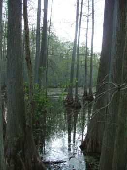 Swamp by Audrey7648