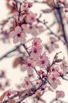 Spring is coming by Ragnarokkr79