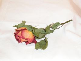 FREE STOCK, Dead Rose 2 by mmp-stock