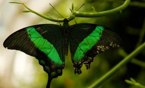 Green Butterfly-Like Thing by picturesarelife