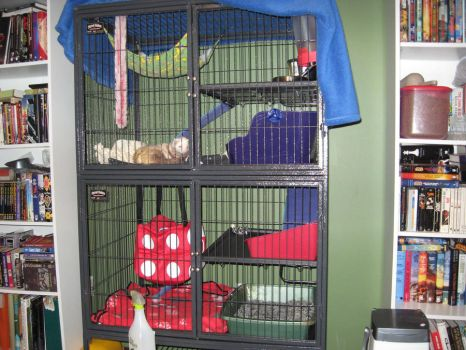 Ferret nation, best cage ever! by Ghanie