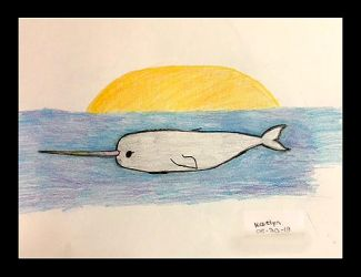 Narwhal by DH-Students-Gallery