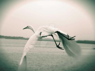 White Crane by epitomei