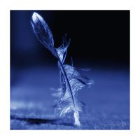 Feather by XanaduPhotography