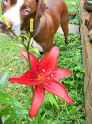 diesel and  the lily by trista25