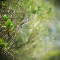 Little bird by Cochalita