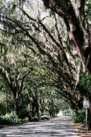 st augustine trees by egon883