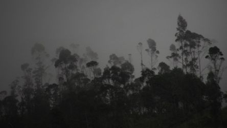Cloud forest by Alaris-Varin