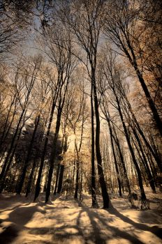 Winter day by tomsumartin