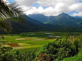 Poi Farmland, Northern Kauai by Utukki-Girl