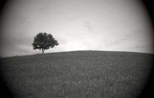 Tree on a Hill by fablehill