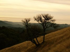 Lone Tree by Pressesky