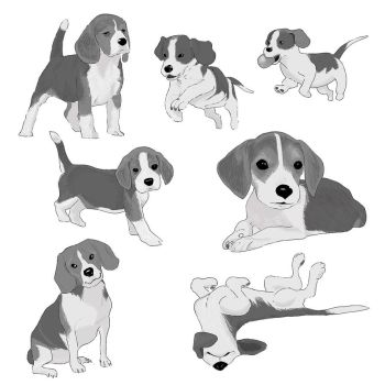 I ve been drawing dogs for a project ... by PascalCampion
