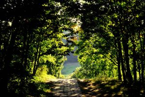 A path by aripi