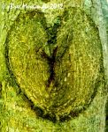 Tree Of Love by BreeSpawn