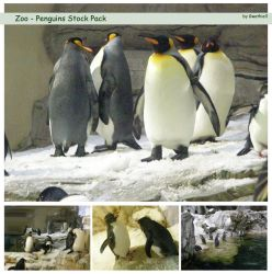Zoo - Penguins Pack by Gwathiell
