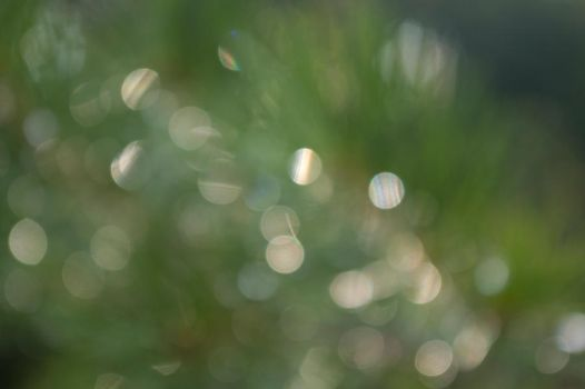 green pine bokeh by duckpondevans