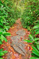 Rocky Rhododendron Trail - Pase Point by somadjinn