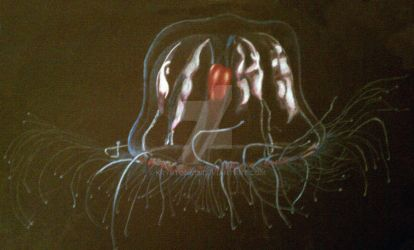 Jelly fish by krypton619