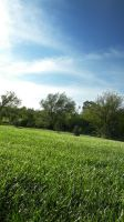 green grassy field by DougFromFinance