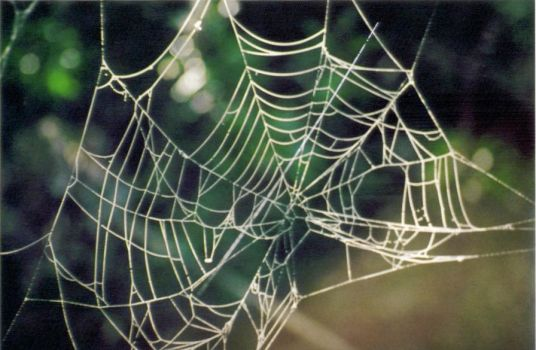 Web by PhotElle