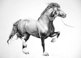 Welsh cob by AliceParkes