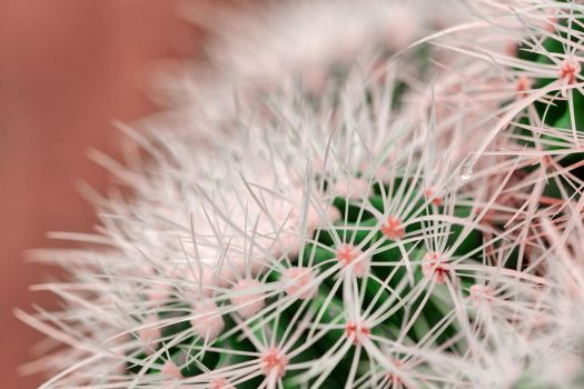 Cactus Dream Spines by somadjinn