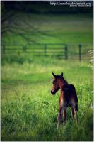 curious foal by MmeLeo