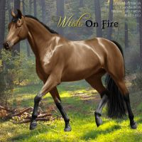 Wish On Fire - EEP ISH Stallion by CloverHoofAcres