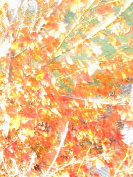 Japanese Maple Abstract by im0tiv8