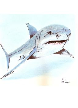 Shark by suitae