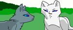 Bluestar and Whitestorm by Rainfire299