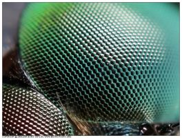 Eye structure by macrophotography