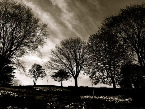 Spring Trees B+W by Lisa-Downing