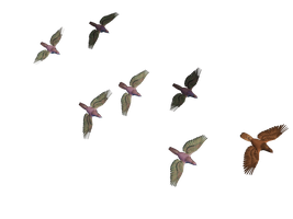 Flying Birds 03 PNG Stock by Roy3D
