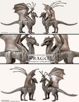 Dragon : Fantasy Anatomy Model by emilySculpts