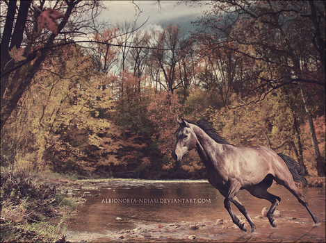Autumn Arriving. by Albionoria-Ndiau