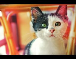 funky cat by junkyshtan