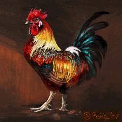 Rufus the rooster by Reptangle
