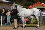 Conformation - Irish Sport Horse Eventer by LuDa-Stock
