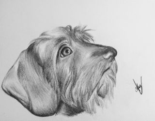 Daschund Portrait by AndyVRenditions