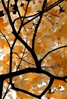 Fractal Autumn by etereal
