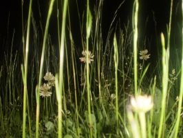 Grass at night by luluie